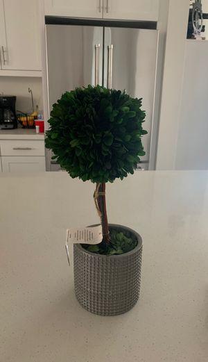 Fake plant for Sale in Newport Beach, CA