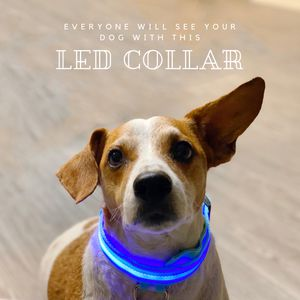 Dog's Led Collar for Sale in San Mateo, CA