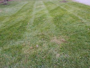 Leaf Removal Yard Clean Ups for Sale in Montpelier, MD