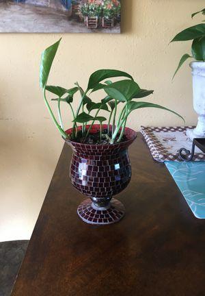 Beautiful Indoor Plant. for Sale in Salt Lake City, UT