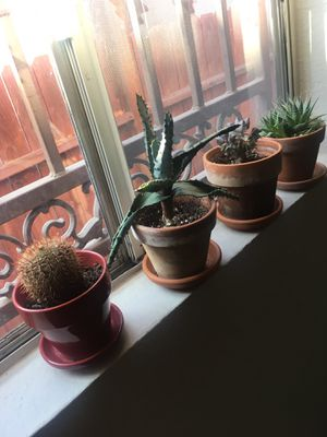Four succulents for Sale in Long Beach, CA