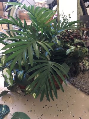 Jungle look fake plant home decor with brown tin for Sale in Murrieta, CA