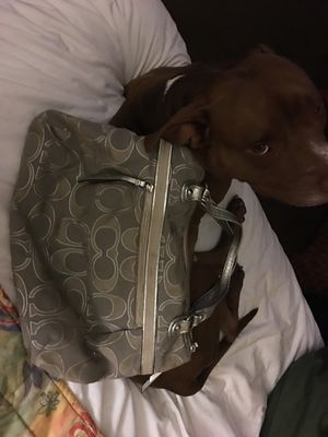 Authentic Coach Purse for Sale in San Diego, CA
