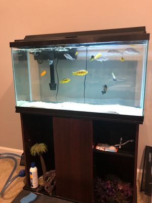 55 Gallon Fish Tank with Stand and Cichlids for Sale in Ashburn, VA