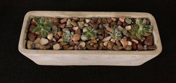 Succulent concrete planters