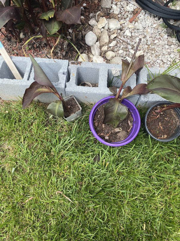 Plants for free