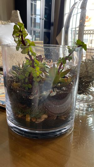 Live succulents in glass dish for Sale in Farmers Branch, TX