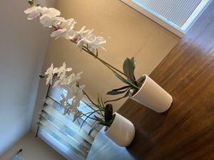 Artificial Orchids for Sale in Minot, ND