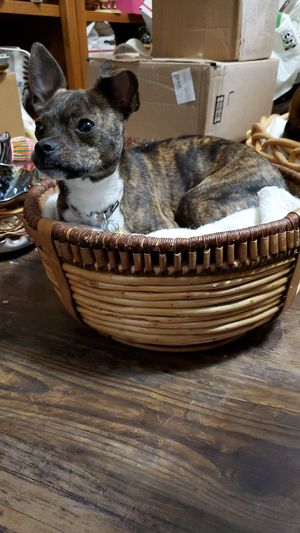 Quality basket for Sale in Vancouver, WA