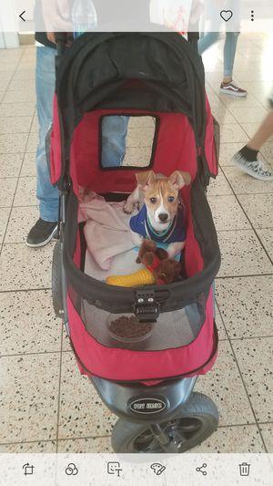 Dog stroller for medium dog only for Sale in San Diego, CA