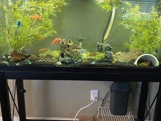 Aquarium 70 Gallon for Sale in Fresno,  CA