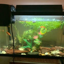 40 Gallon Fish Tank Includes Heater, Light, Rocks Etc. for Sale in New York,  NY