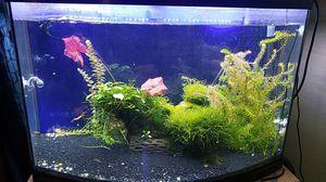 36 gallon bow front aquarium for Sale in Riverside, CA
