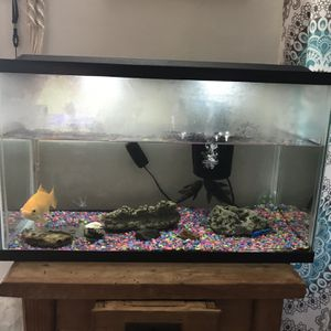 Aquarium Includes: 3 Fish, Food, Small Table, Filters, 2 Black Fish Are The Fish Tank Cleaners . Asking $45.00 For Everything for Sale in Bellflower, CA