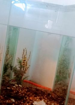 24 Gallon Aquarium with Filter and Seascape for Sale in Gilbert,  AZ