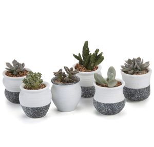 🔥 Brand New Small Ceramic Succulent Planter Pots with Drainage Hole Set of 6 Snowflakes Glazed 🔥 for Sale in Tampa, FL