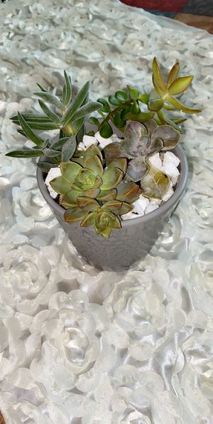 Succulent love in gray pot ❤️ for Sale in Ruskin, FL