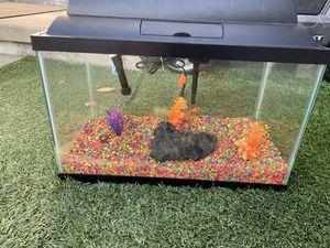10 gallon fish tank for Sale in Los Angeles, CA