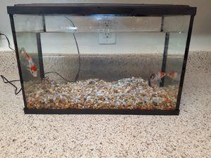 Koi fish/ fish tank 5 gallon for Sale in Di Giorgio, CA