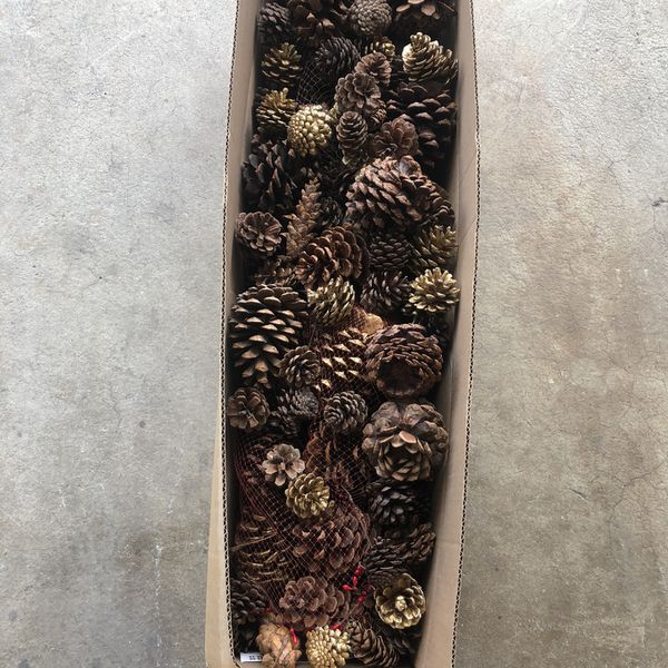 Pine cones For Crafting