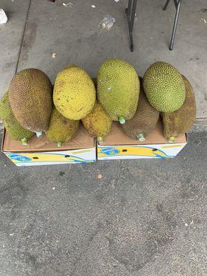Jack fruit 4905 yosmite Blvd for Sale in Empire, CA