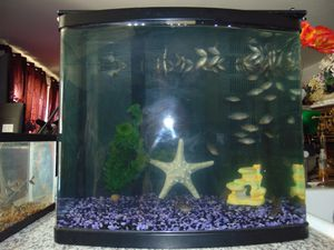 20 gallon fish tank with filter and decor for Sale in Las Vegas, NV