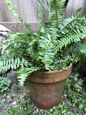 Fern Desk Top Plant with Pot for Sale in Houston, TX