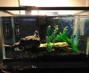 Complete 10 gallon aquarium for Sale in Antioch, CA