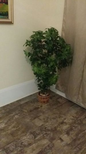 Plastic plant for Sale in Kissimmee, FL
