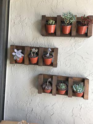 Succulent rack / holder for Sale in Miami, FL