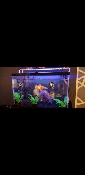 40 gallon fish tank for Sale in Montebello, CA