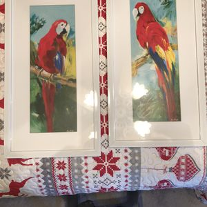 Parrot Pictures for Sale in Mount Dora, FL