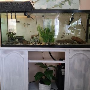 Tank Fish/reptile for Sale in Jurupa Valley, CA