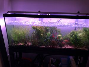 55gal tank + fish + filter + light + heater + supplies for Sale in SeaTac, WA