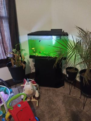 Willing to negotiate. 29 gallon fish tank as well as fish for sale for Sale in Lynchburg, VA