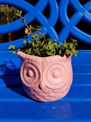 Glazed owl planter with real succulents for Sale in Gilbert, AZ