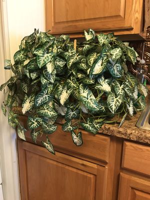 Artificial plant for Sale in Ford, KY