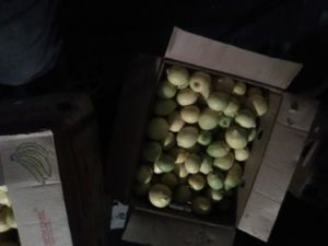 Lemons for Sale in US