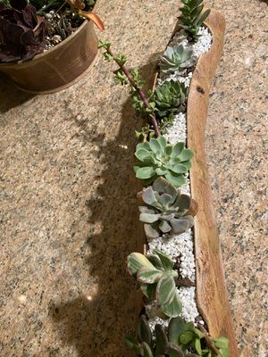 Succulent tree log planter for Sale in Jurupa Valley, CA
