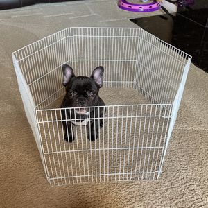 Small Dog Playpen for Sale in Seattle, WA