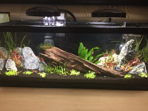 2.5 gallon fish tank, tank only for Sale in Atlanta, GA