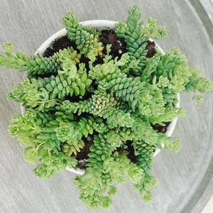 Succulent Plants for Sale in Miami Gardens, FL