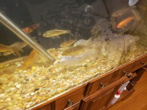 Fish tank heater for Sale in Westminster, CA