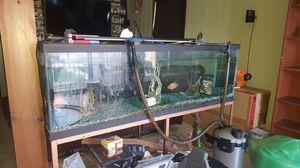 Fisk tank for Sale in Jersey City, NJ
