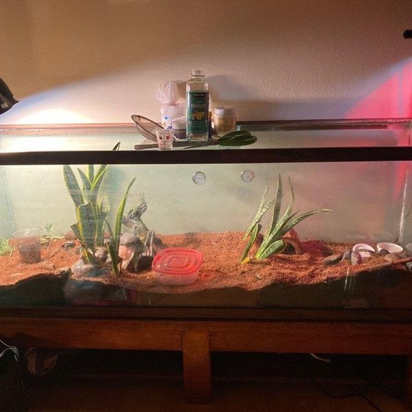 100 gallon tank with stand