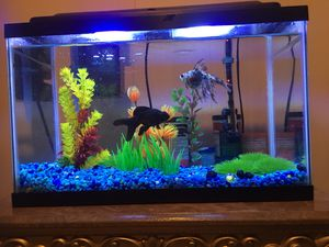 10 gallon fish tank with everything included, food, conditioner, decoration, plus two more fish bowls all for $280 for Sale in Elizabeth, NJ