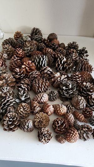 Various pine cones for crafting Free for Sale in Henderson, NV