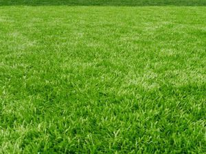 Free grass /pasto gratis for Sale in Tustin, CA