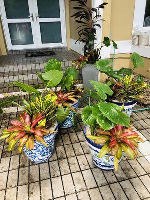 🦋🧚🏼♀️Gorgeous ceramic Potted plant arrangement!🍁🌸 for Sale in Davie, FL