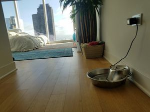 Pet Silver Metal Electronic Water Fountain for Sale in Chicago, IL